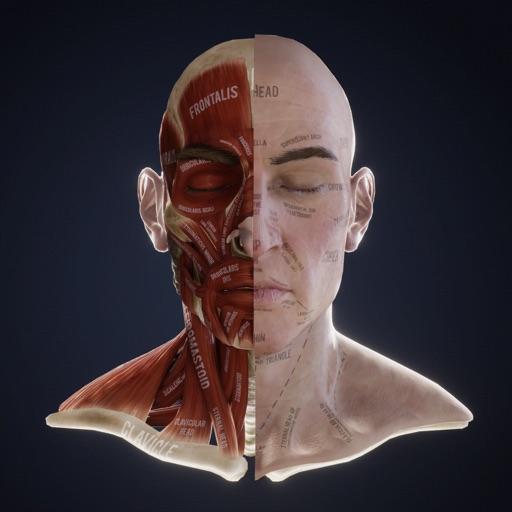 Lex: Human Head Anatomy-SocialPeta