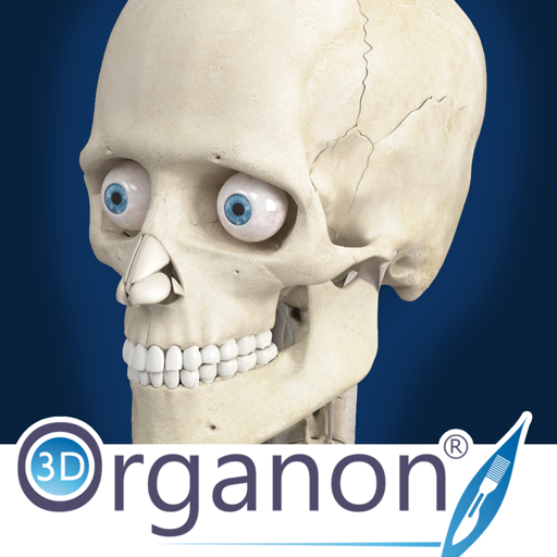 3D Organon Anatomy - Skeleton, Bones, and Ligaments-SocialPeta