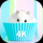 Hamster Wallpapers-SocialPeta