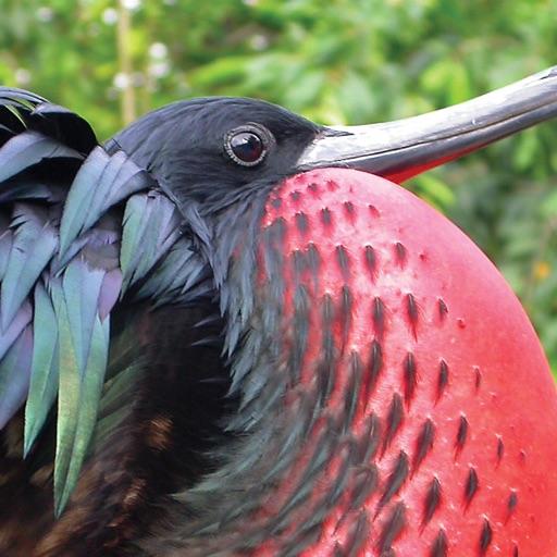 Christmas Island Birds-SocialPeta